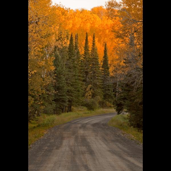 Arrowhead-Pines-sfw-min