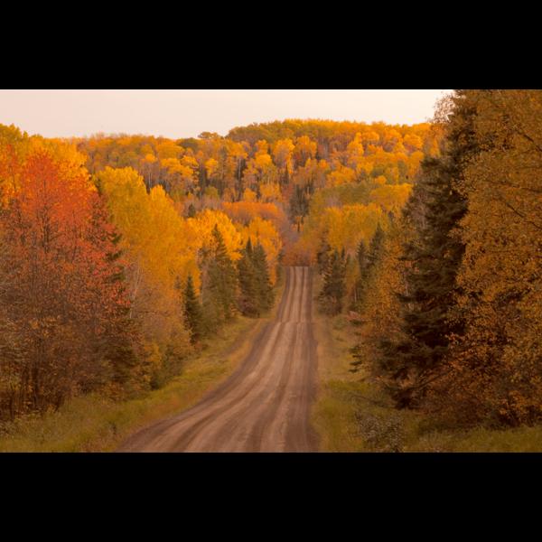 Arrowheat-Trail-sfw-min